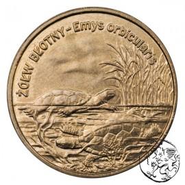 III RP, 2 złote, 2002, Żółw Błotny